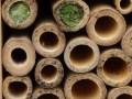 Solitary-Bee-Nests-Bronwen-Woods