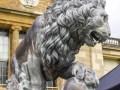 Stowe-Lion-Hugh-Herdon