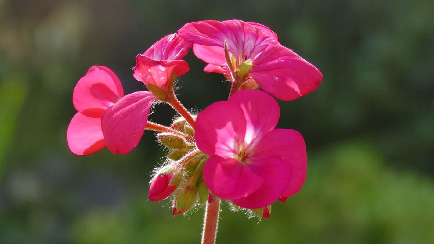 PC-Flower#1-800.jpg