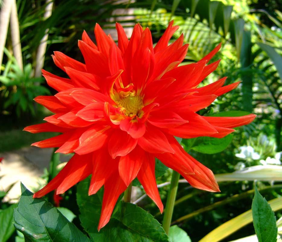 PC-Flower#6-800.jpg