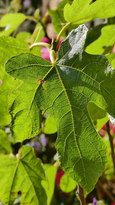 PC-Leaf#1-800.jpg