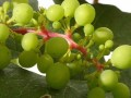 Harvest-Brian-Eastcott
