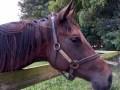 Horse-Jean-Relf