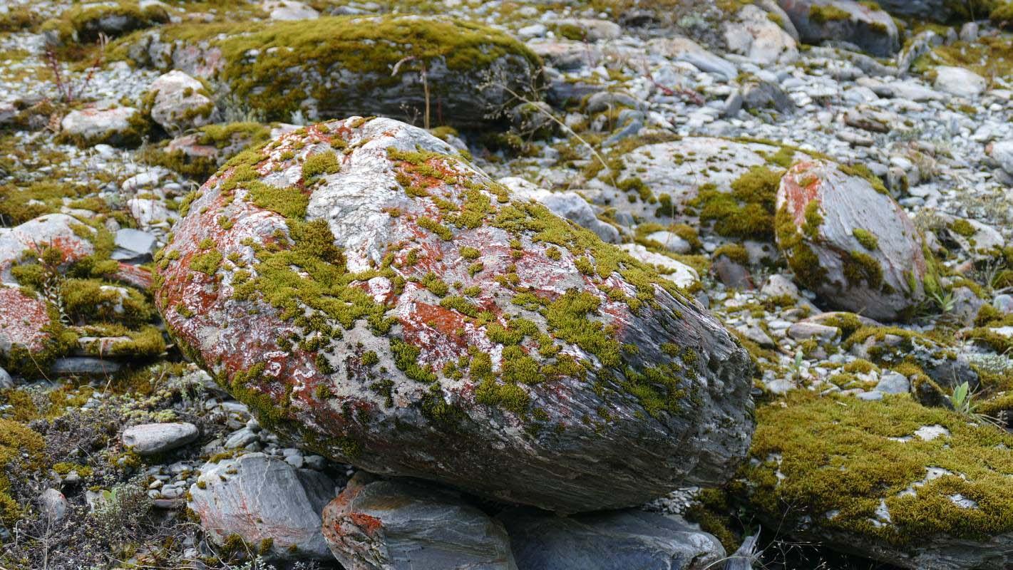 Lichen-PaulCrawford--800.jpg