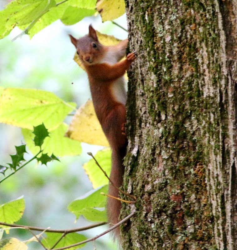 RedSquirrel-SteveDutton--800.jpg